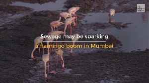 Polluted Paradise for Flamingos [Video]