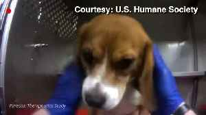 Activists Demand Release of Beagles During Protest Outside Michigan Animal Testing Lab [Video]