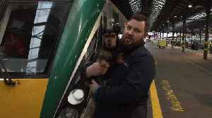 Owners of Irish dog who boarded a train by himself are found [Video]