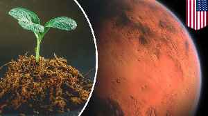 Hybrid super plants could someday grow on Mars [Video]