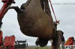 Riff Raff the South African elephant dodges death sentence [Video]