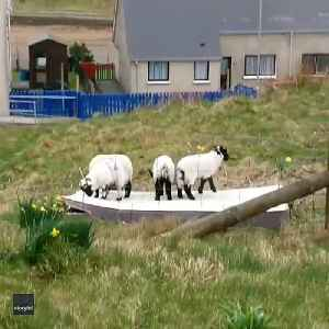 Counting Sheep Won't Help You Sleep on This Mattress [Video]
