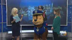 Paw Patrol Live! Race To The Rescue Comes To The Academy Of Music [Video]
