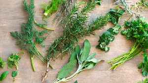 What To Do with Herb Stems [Video]