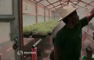 U.S. aid helped Guatemalan farmers from migrating [Video]