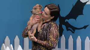 Rescue Dog Rescue: Game Of Thrones Edition With Emilia Clarke [Video]