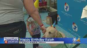 Golden Retriever Gets Special Birthday At Children's Hospital [Video]