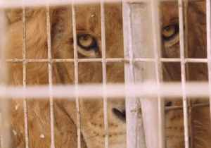 Animals Rescued From Gaza Strip Zoo [Video]