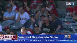 Swarm Of Bees Delay Angels-Rangers Game [Video]