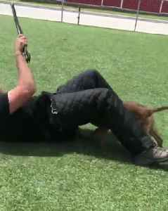 K9 Puppy Bites Police Officer's Crotch During Training [Video]
