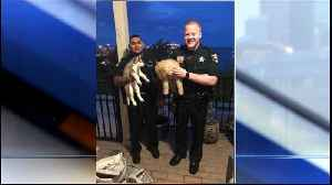 Deputies recover puppies stolen at Port St. Lucie store; two suspects detained [Video]