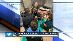 GBPD: Police dog stabbed during encounter with suspect [Video]