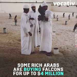 Falcons Are So Valued In The Arab Gulf States They Even Have Their Own Passport [Video]