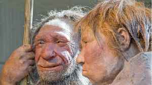 Neanderthals And Woolly Mammoths May Have Shared Genetic Traits [Video]