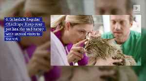 13 Ways to Pamper Your Pet (National Pet Day) [Video]