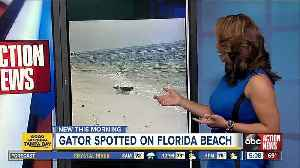 Alligator seen relaxing in surf on Florida beach [Video]