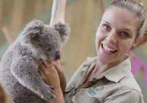 Joey Spends 'Koala-ty' Time With Zookeepers to Celebrate First Birthday [Video]