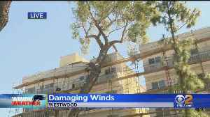 Crews Working To Clear Trees, Repair Power Lines Brought Down By Gusty Winds [Video]