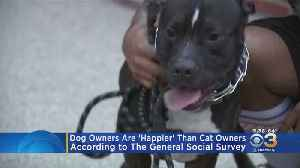 Dog Owners Are Happier Than Cat Owners, Study Finds [Video]