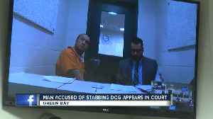 Man accused of stabbing dog appears in court [Video]