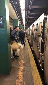 Subway Conductor Won't Let Man Board with Dog [Video]