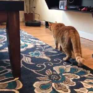 Scared Cat Walks Backwards to Escape Robotic Vacuum [Video]
