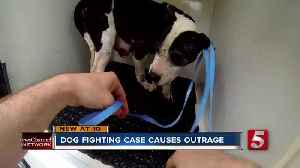 Aftermath of dog fighting case sparks outrage [Video]