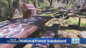 National Forest Vandalized [Video]