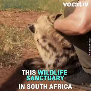 Swiss Financial Planner Abandons Career to Set Up a Sanctuary in South Africa [Video]