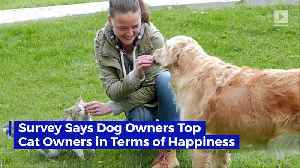 Survey Says Dog Owners Top Cat Owners in Terms of Happiness [Video]