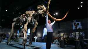 Should Scientists Resurrect The Woolly Mammoth? [Video]