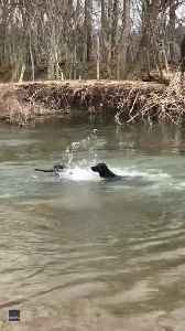Puppy Doesn't Quite Have the Doggy Paddle Down [Video]
