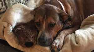 Family Warns Others After Dog Dies from Eating Chew Bone [Video]