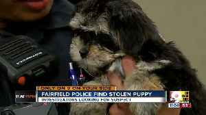Stolen puppy found safe after ruff 24 hours [Video]
