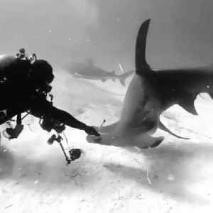 Guy Comes Across Curious Hammerhead While Shark Diving [Video]
