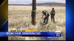 Man sentenced after pleading guilty to raptor poaching [Video]