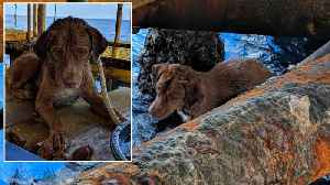 Stranded Dog Rescued After Being Found 220km From Shore [Video]