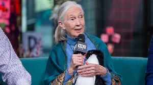 Dr. Jane Goodall Explains Why Saving Animal Habitat Is So Crucial [Video]