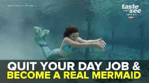 Mermaids Wanted! Weeki Wachee Springs holding auditions to become part of their world | Taste and See Tampa Bay [Video]