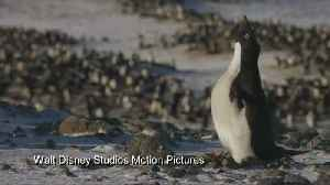 Jane Goodall on why penguins are so cute: 'It's the way they walk, it's so ridiculous' [Video]