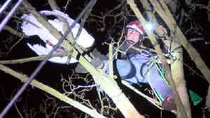 Swantastic Save! Animal-loving Climber Goes The Extra Mile In Dangerous Rescue Of Swan Trapped In Tree 50ft In The Air  [Video]