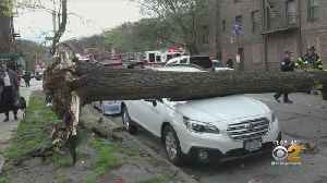 Wind To Blame For Downed Trees, Wall, Power Lines [Video]