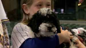 Brewers' Christian Yelich helps dad make good on promise for puppy [Video]