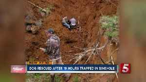 Dog rescued after 19 hours trapped in sinkhole [Video]