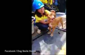 News video: Dog stranded in the Gulf of Thailand is rescued by oil rig workers and given a warm welcome on dry land