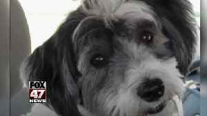 Pretrial date set in deadly dog attack [Video]