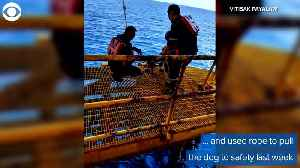 WEB EXTRA: Dog Rescue Off Thailand [Video]