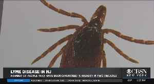 Expert Warns About Lyme Disease And New Jersey's Uptick In Ticks [Video]