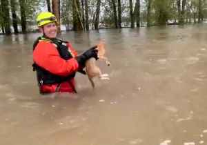 Firefighters Rescue Stranded Cat From Salem Flooding [Video]