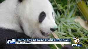 San Diego Zoo extends panda exhibit by two days [Video]